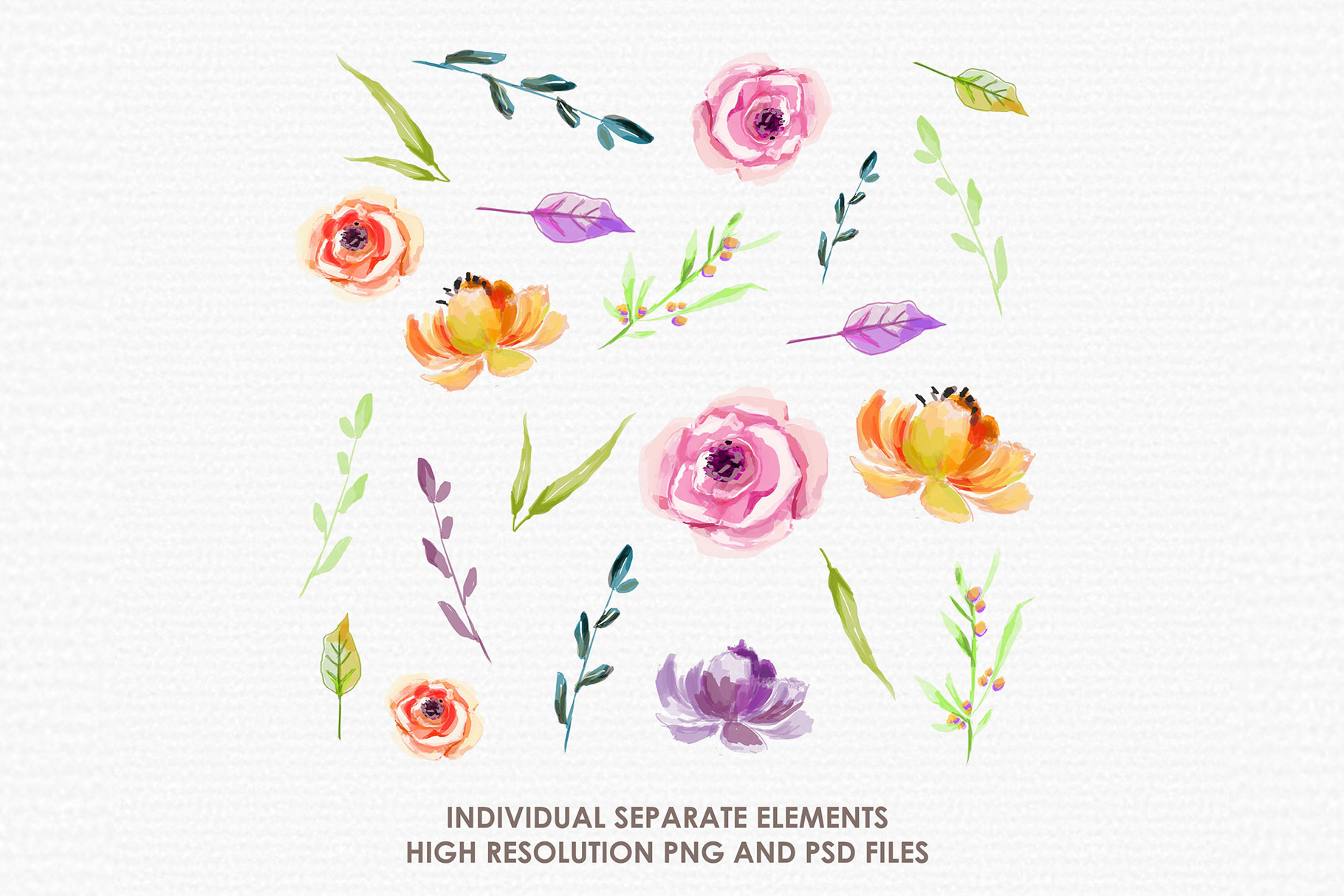 Bergenia - Digital Watercolor Floral Flower Style Clipart example image 2