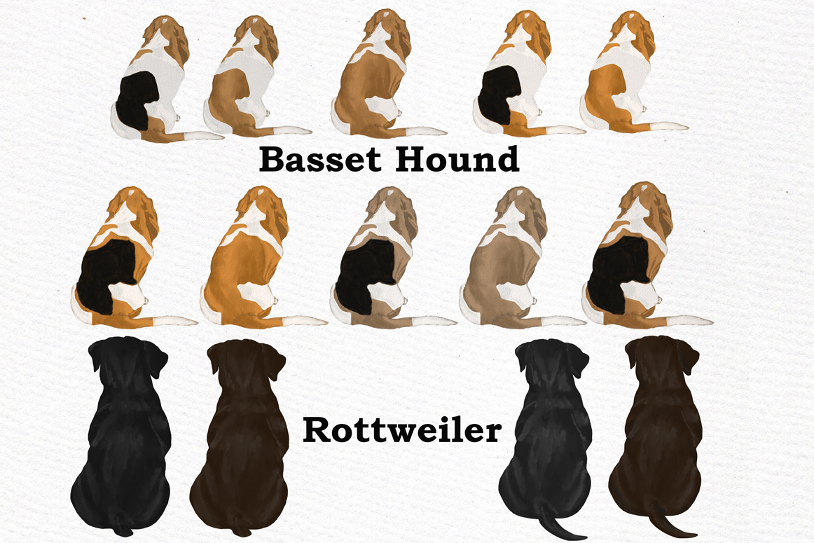 Dog Clipart, Dog breeds, Pet clipart,Puppies clipart Dog Png example image 5