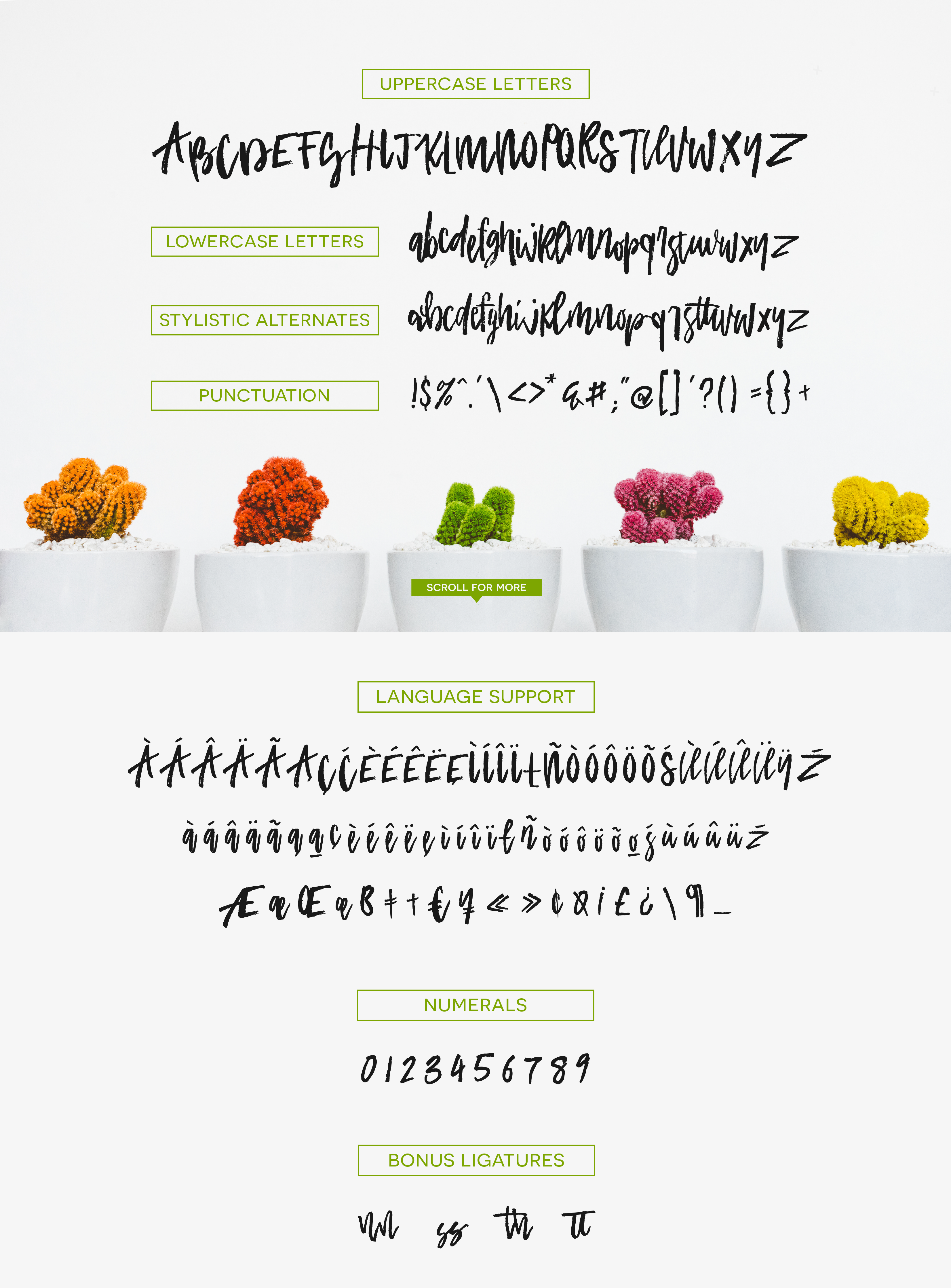 Academy House Font + Logos example image 9