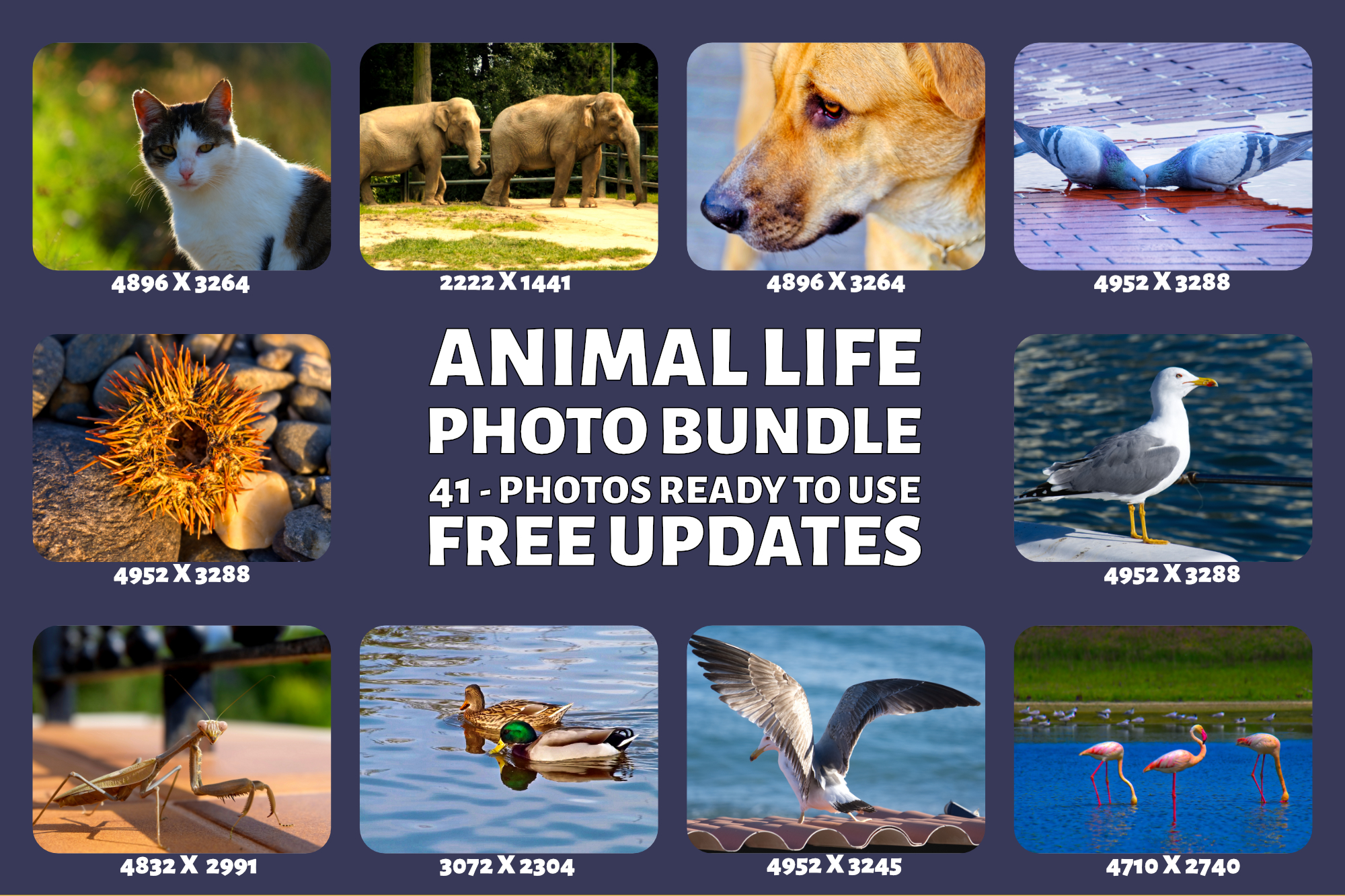 Animal Life Photo Bundle example image 2