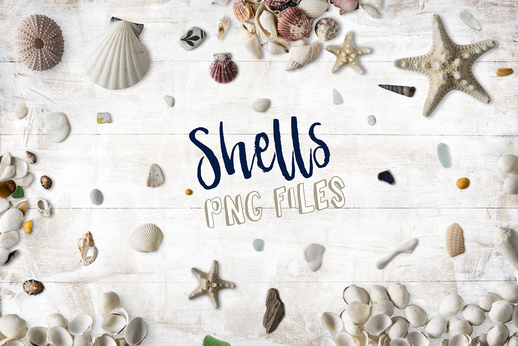 Shells PNG Collection Photo Clip Art example image 1