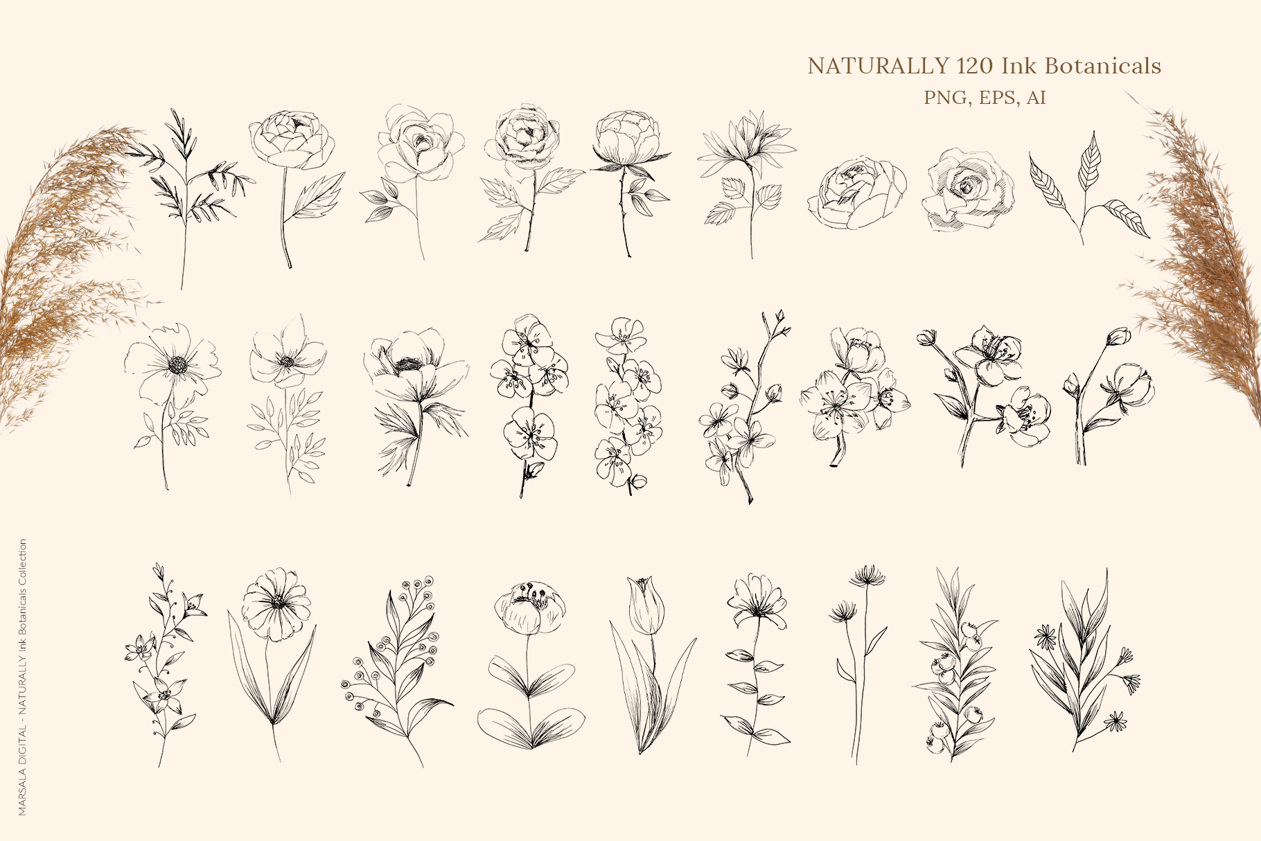 Ink Botanicals Vintage Wildflowers Ink Botanicals Vintage example image 12
