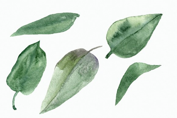Eustoma Clip Art Set + Wreath example image 5