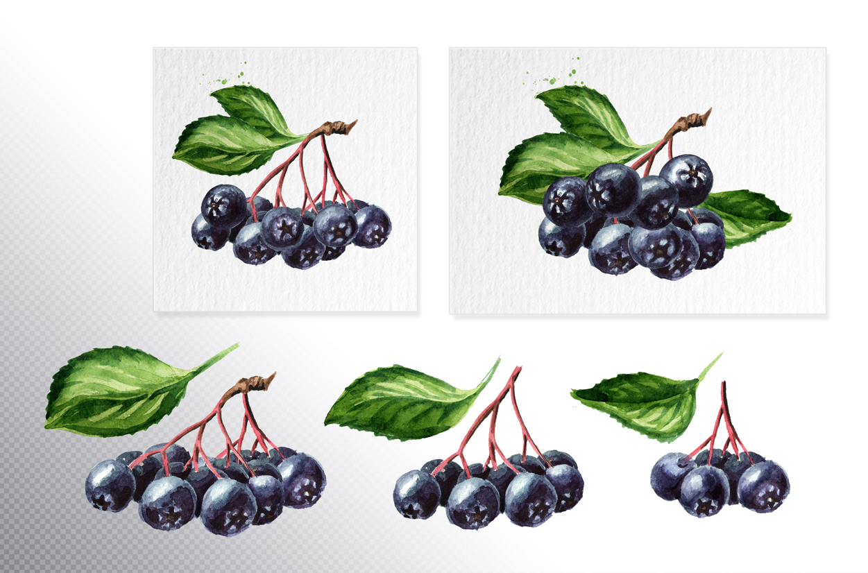 Aronia. Watercolor collection example image 3