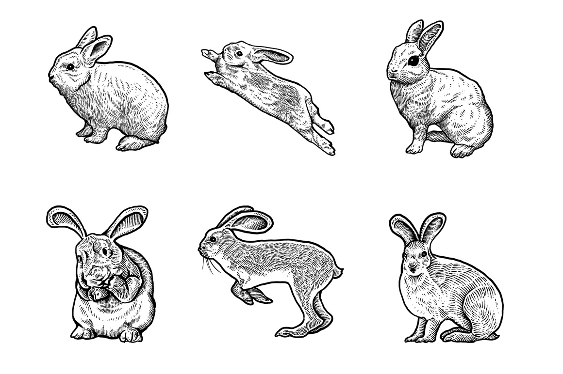 Rabbits Collection Art example image 2