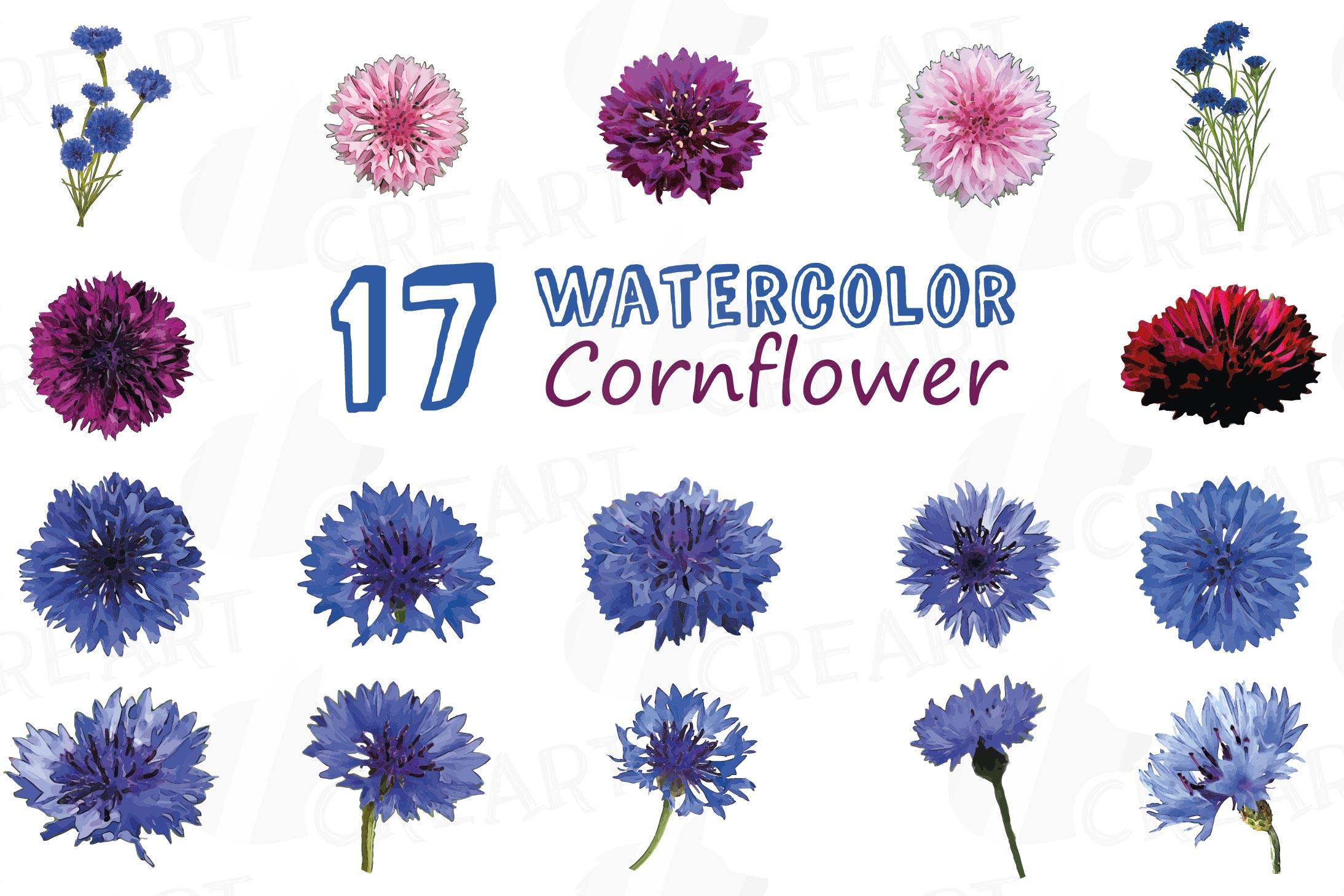 Cornflower watercolor clip art pack, bachelor's button example image 3