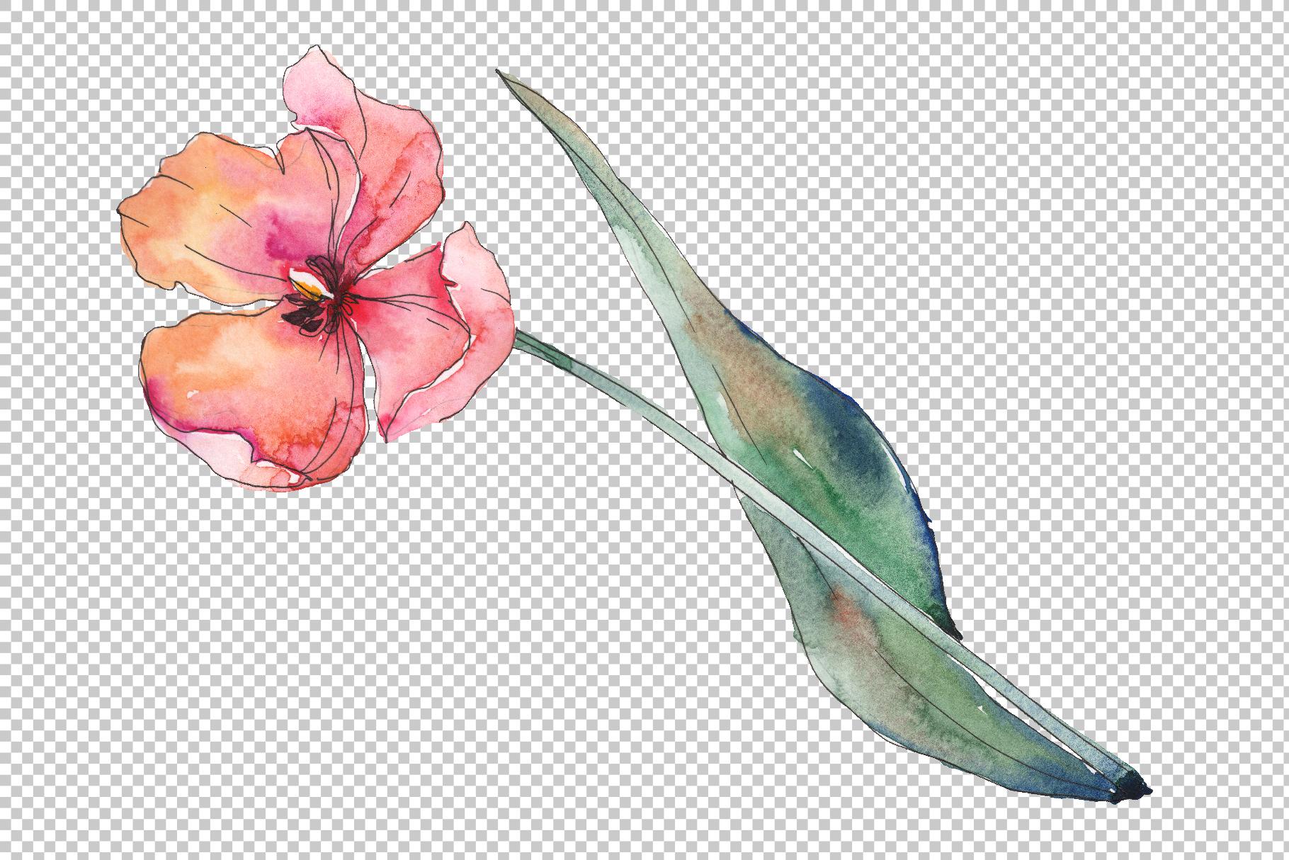 Bouquet of prometheus tulip Watercolor png example image 5
