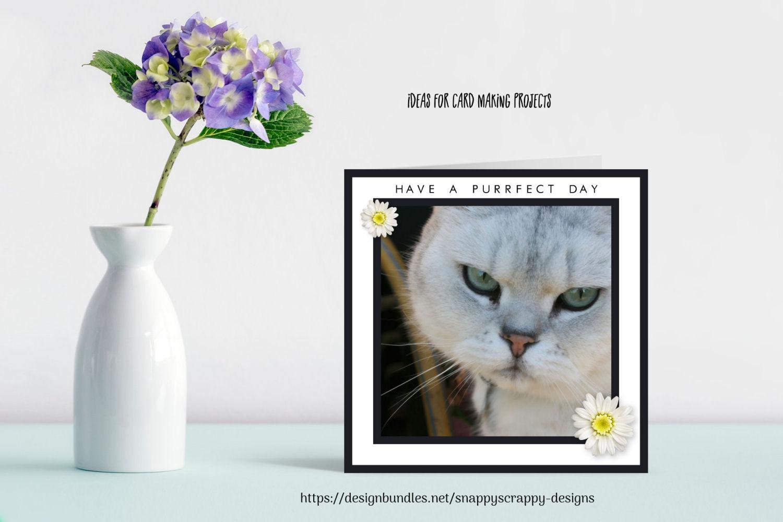 Animal Portrait Photographs example image 7