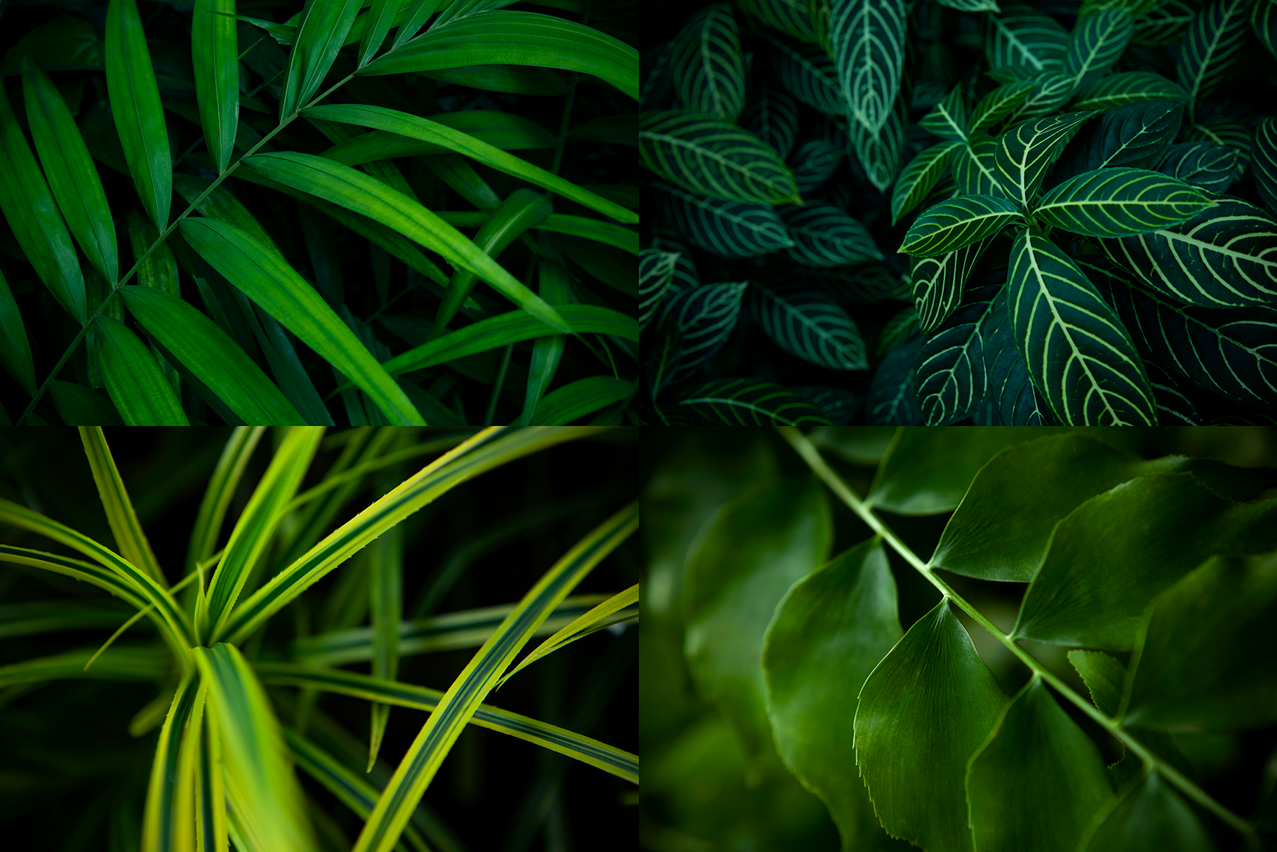 12 Tropical Green Leaves Backgrounds example image 2