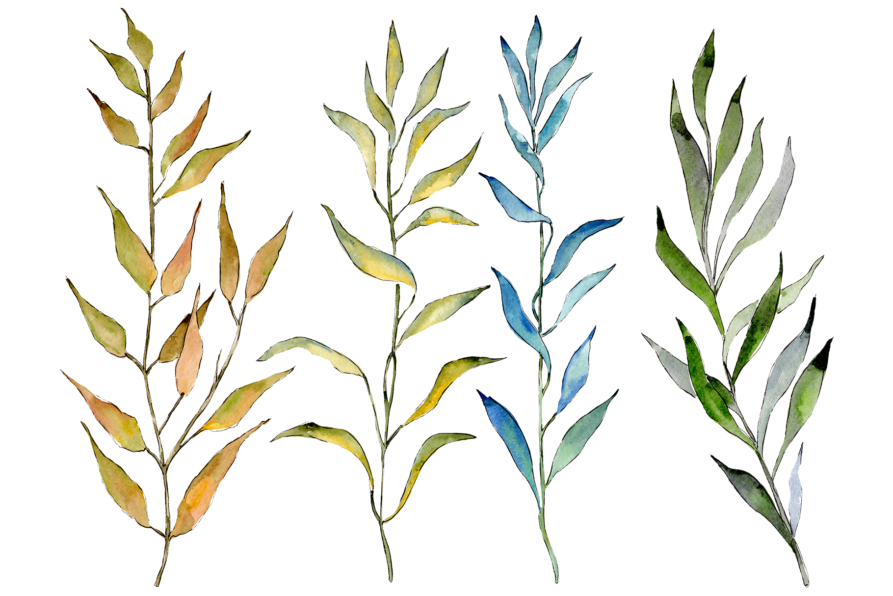 Willow branches PNG watercolor set example image 1