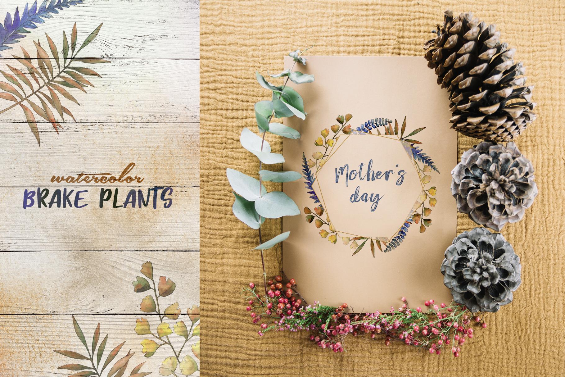 Brake plants PNG watercolor set example image 4