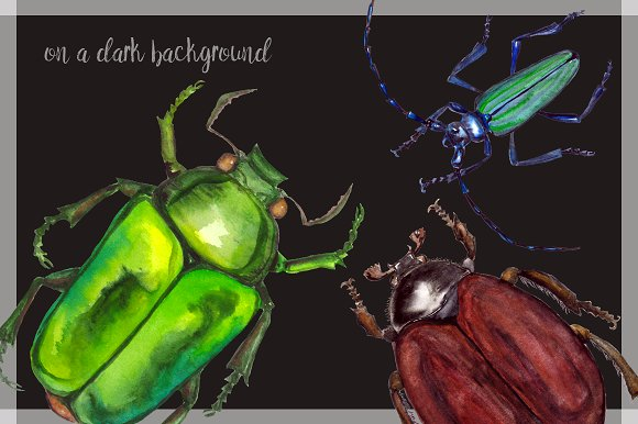 Watercolor Beetles Clipart & Print example image 4