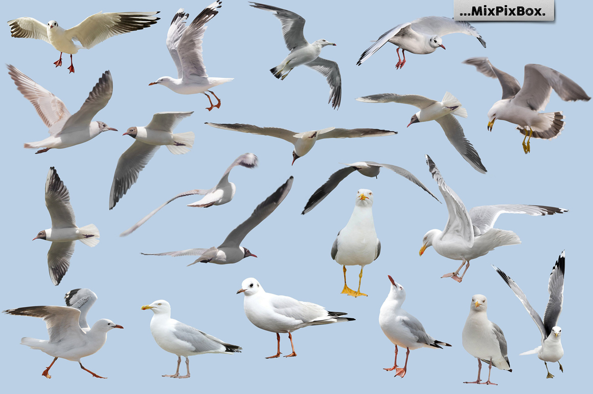 Seagulls Photo Overlays example image 4