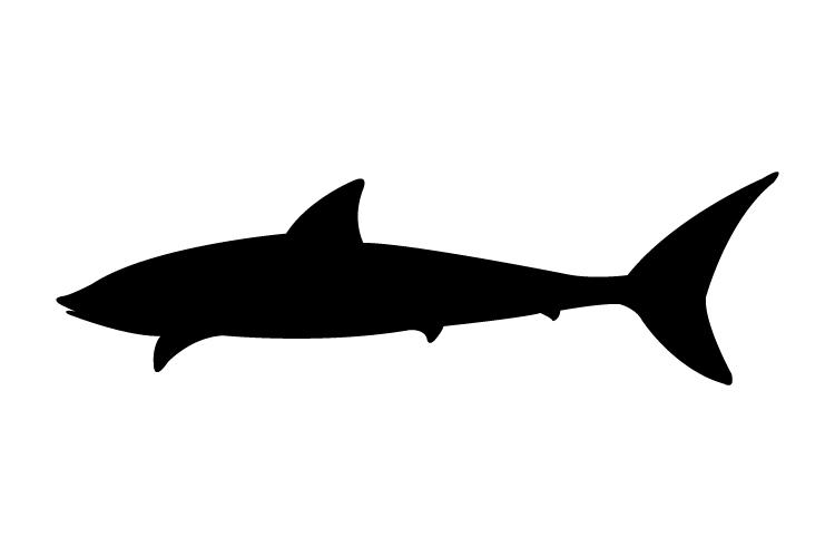 Shark icon example image 1