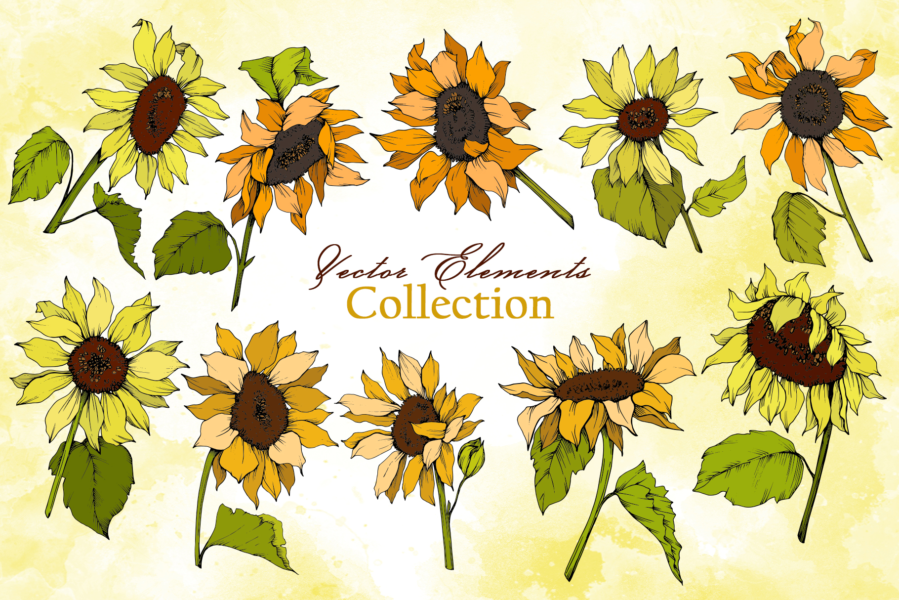 Sunflower Vector Collection example image 6