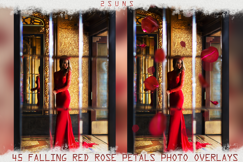 Falling Rose Petals Photo Overlays , Rose Petals, Red Rose example image 6