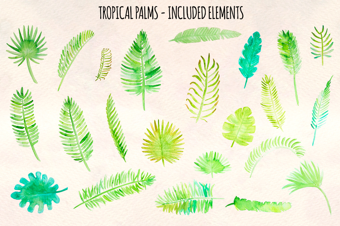 Tropical Palm Leaves 23 Natural Forest Elements example image 3