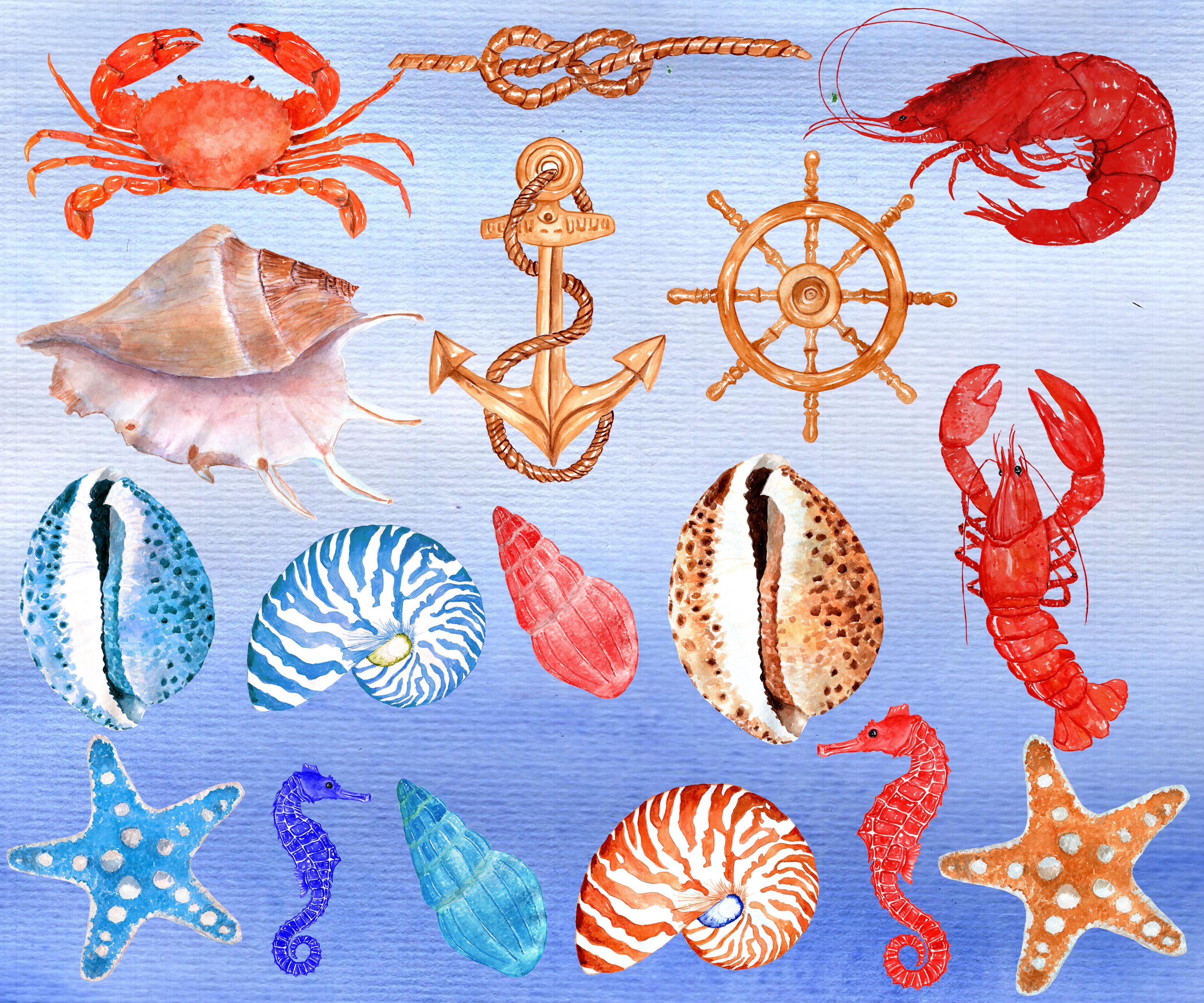 Seashell Nautical Watercolor Clipart example image 2