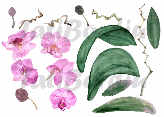 19 Watercolor Orchid Clip Art + Print example image 3
