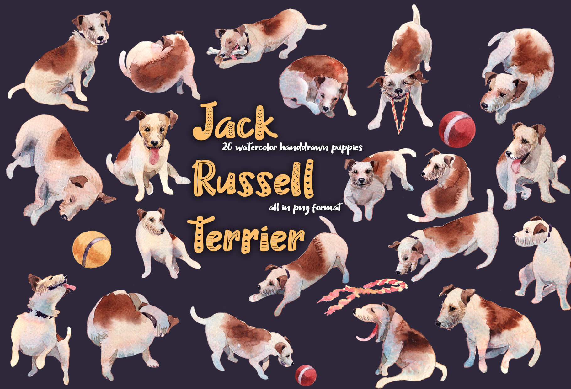 Jack Russell Terrier example image 1