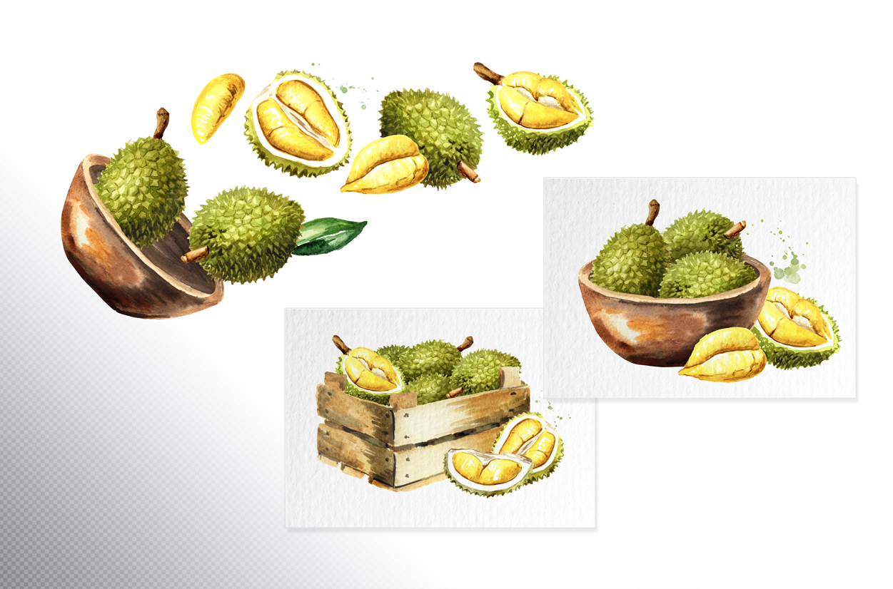 Durian. Watercolor collection example image 5