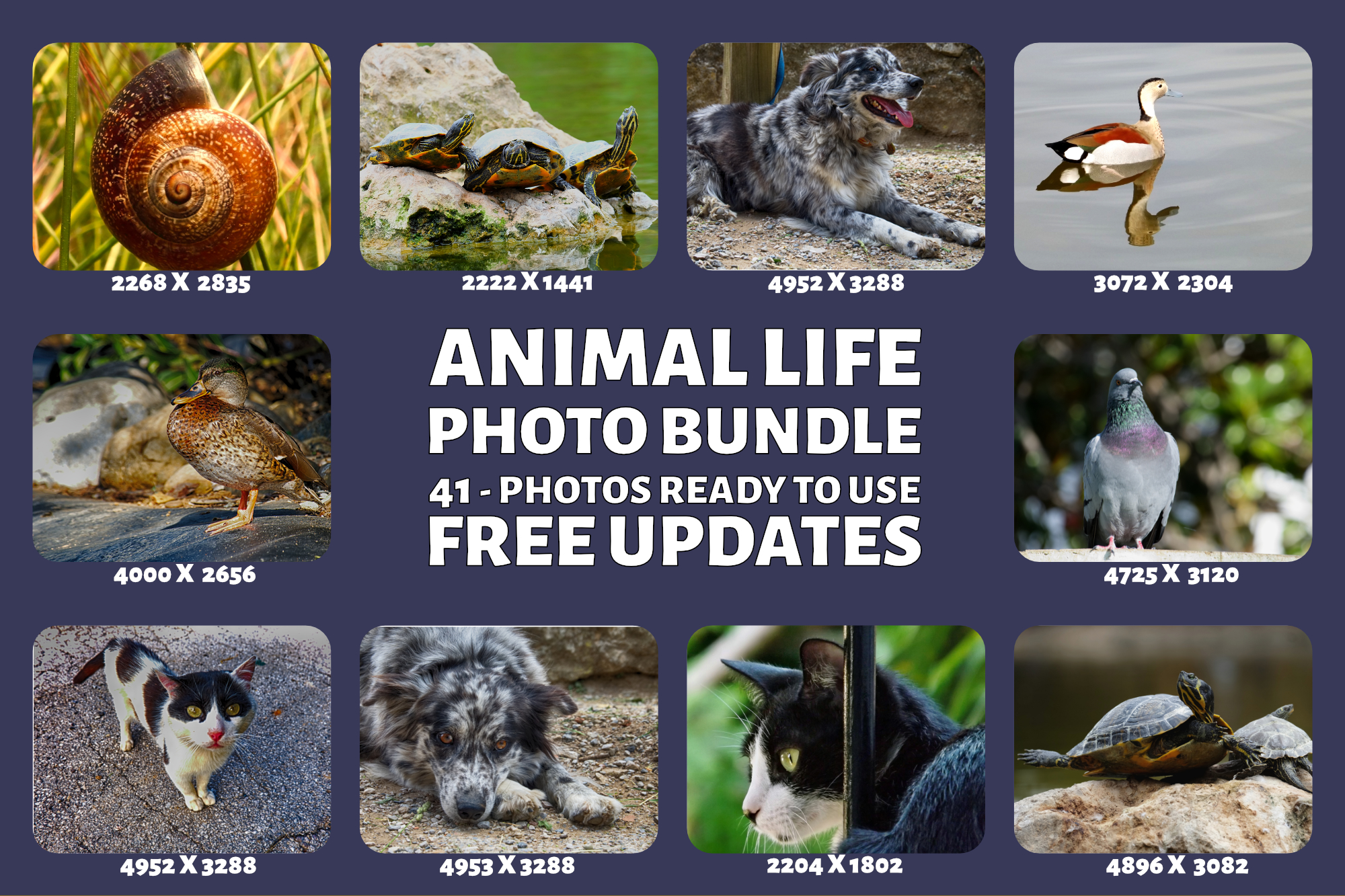 Animal Life Photo Bundle example image 3