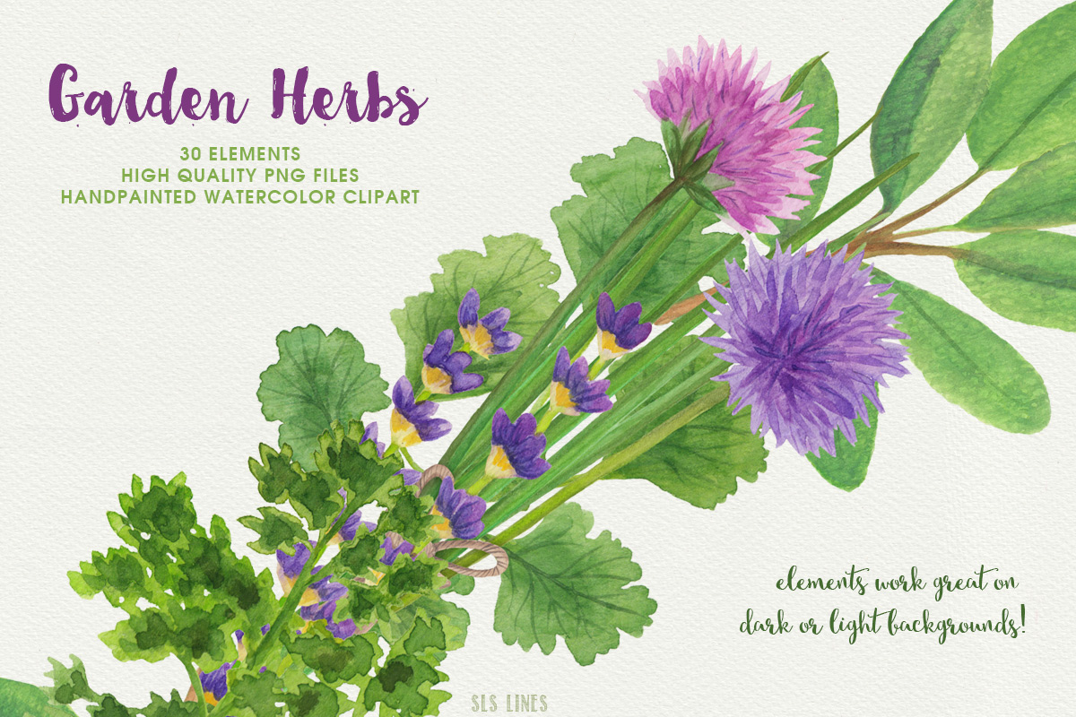 Garden Herbs Watercolor Clipart, PNG example image 5