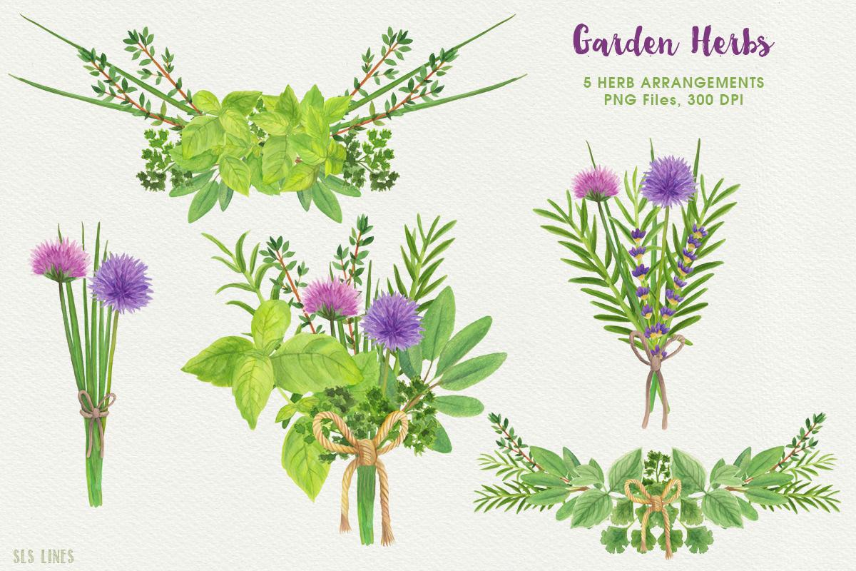 Garden Herbs Watercolor Clipart, PNG example image 4