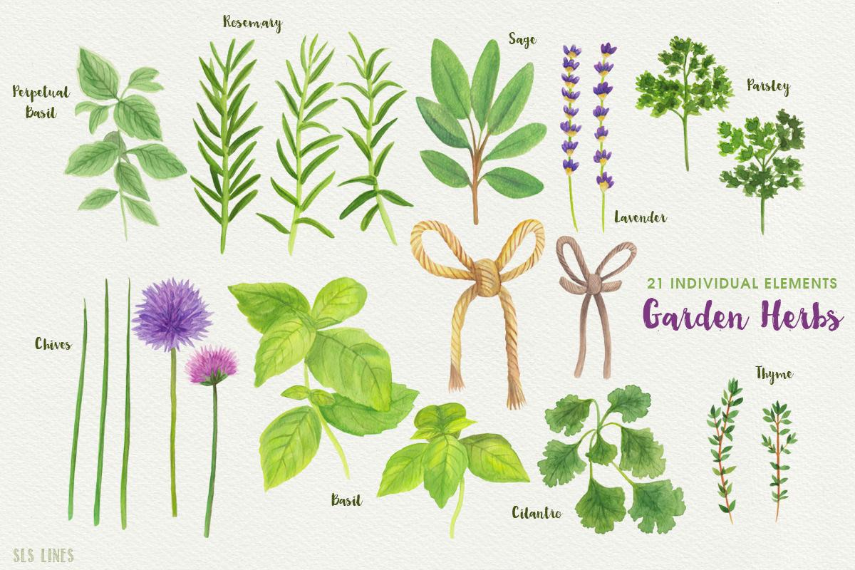 Garden Herbs Watercolor Clipart, PNG example image 2
