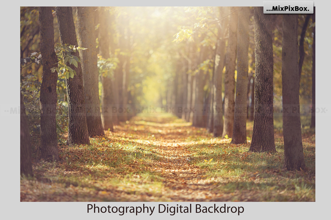 Autumn Alley Backdrop example image 3