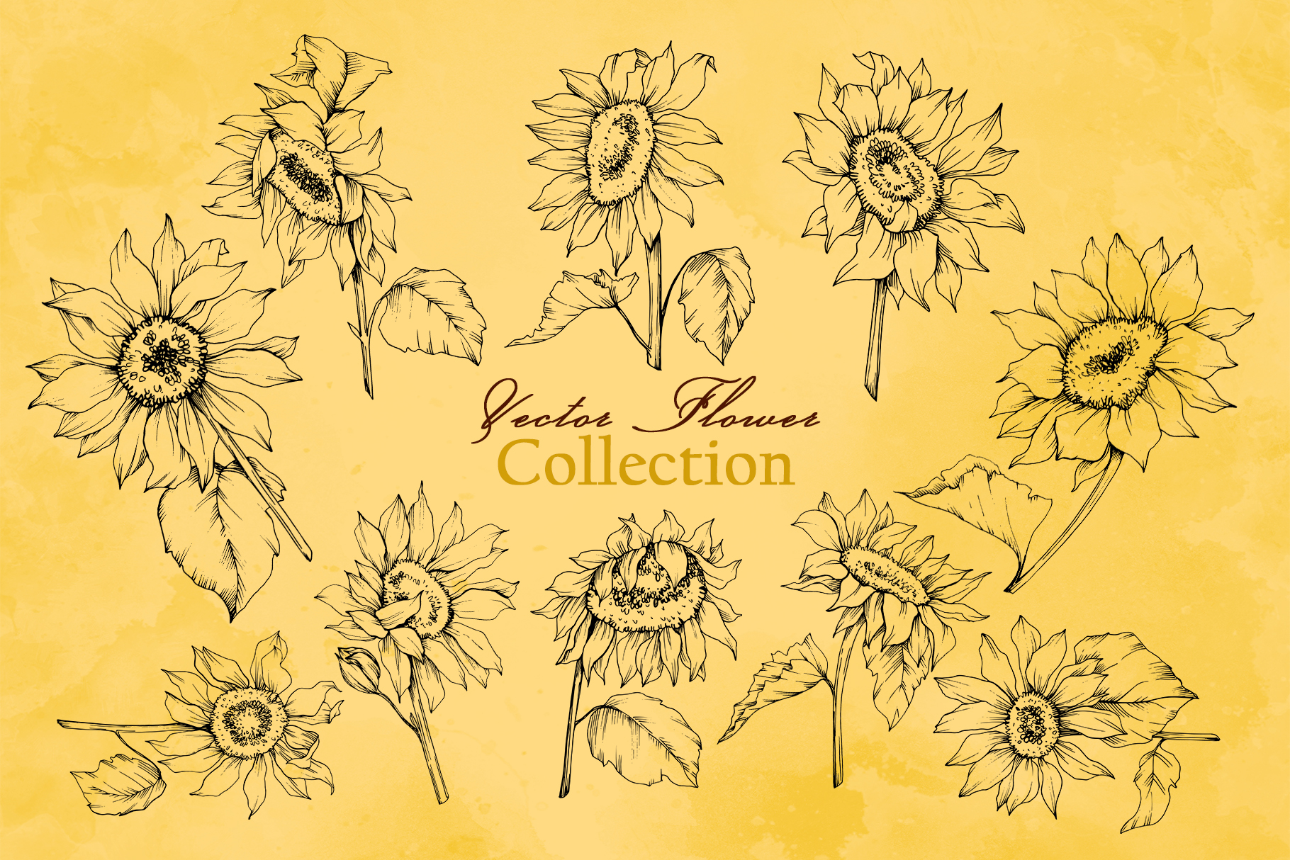 Sunflower Vector Collection example image 2