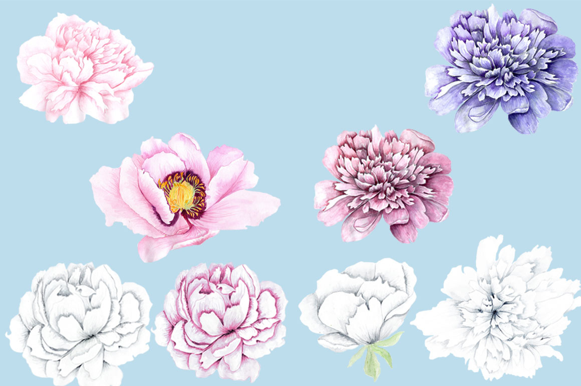 Watercolor peonies clipart example image 2