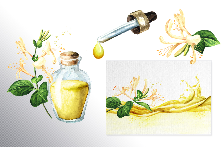 Honeysuckle. Watercolor set example image 9