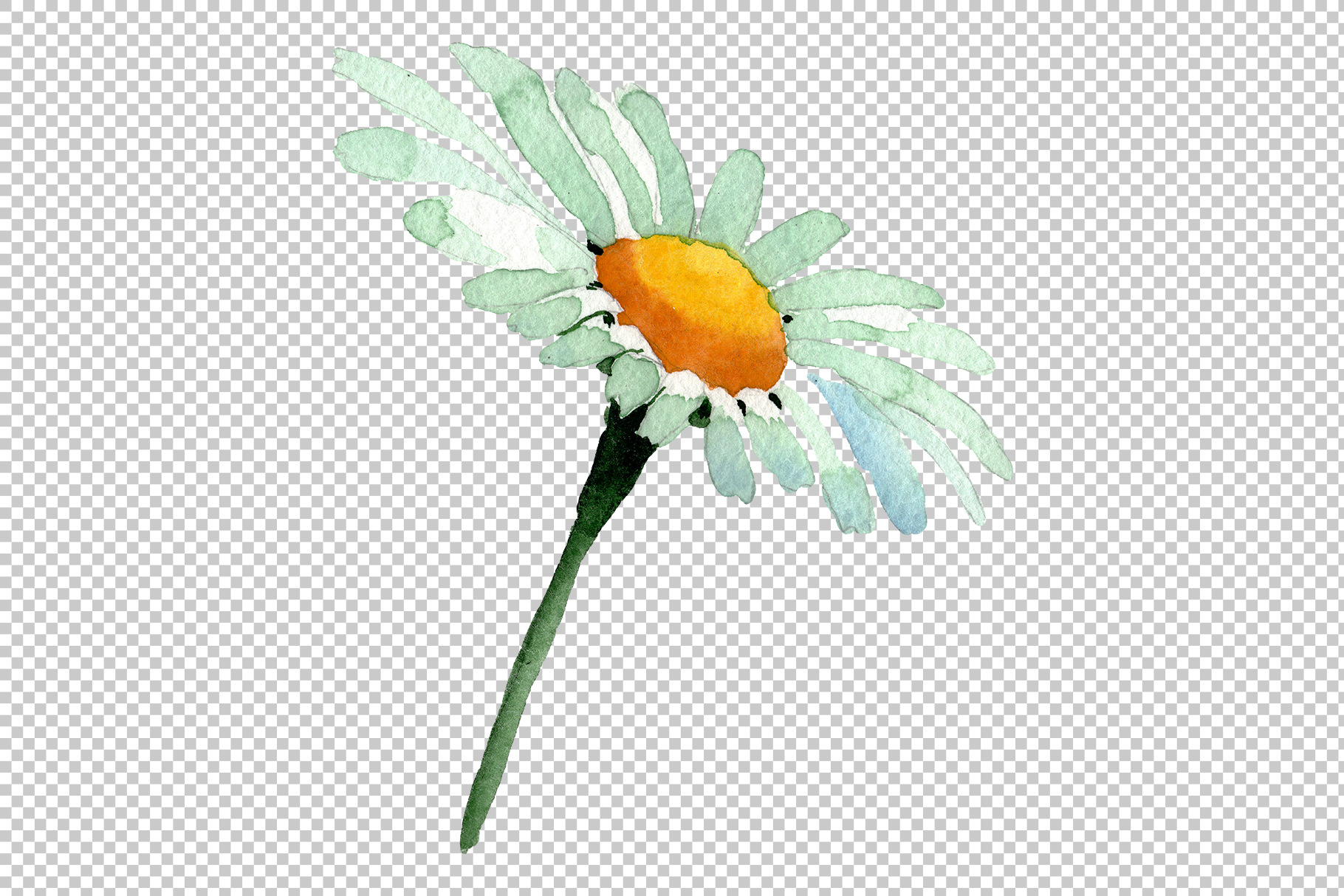 Big white chamomile Watercolor png example image 5