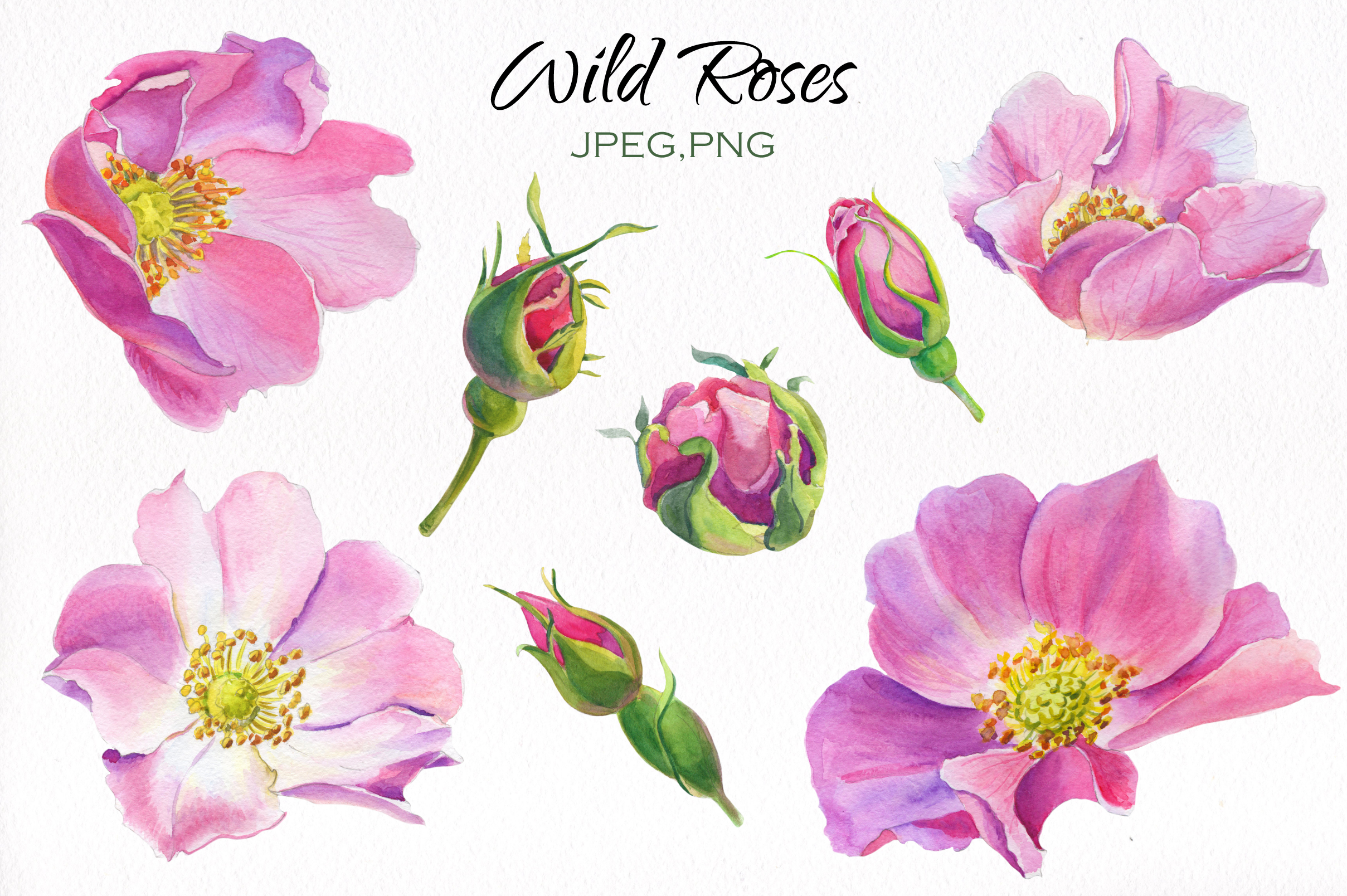 Aroma of Wild Roses. Watercolor set. example image 3