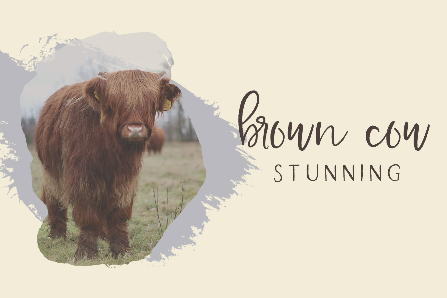 Farmhouse Country Rustic Cursive Font example image 6