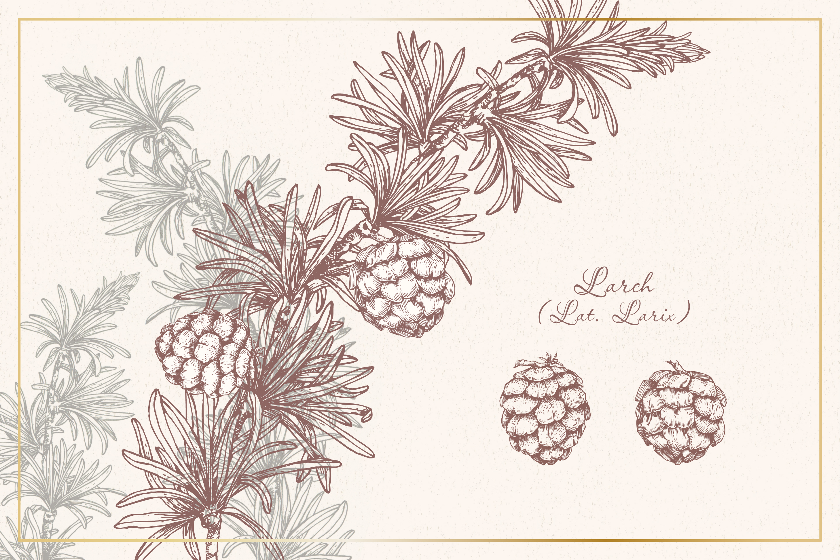 Botanical sketchbook. Vol.1 example image 10