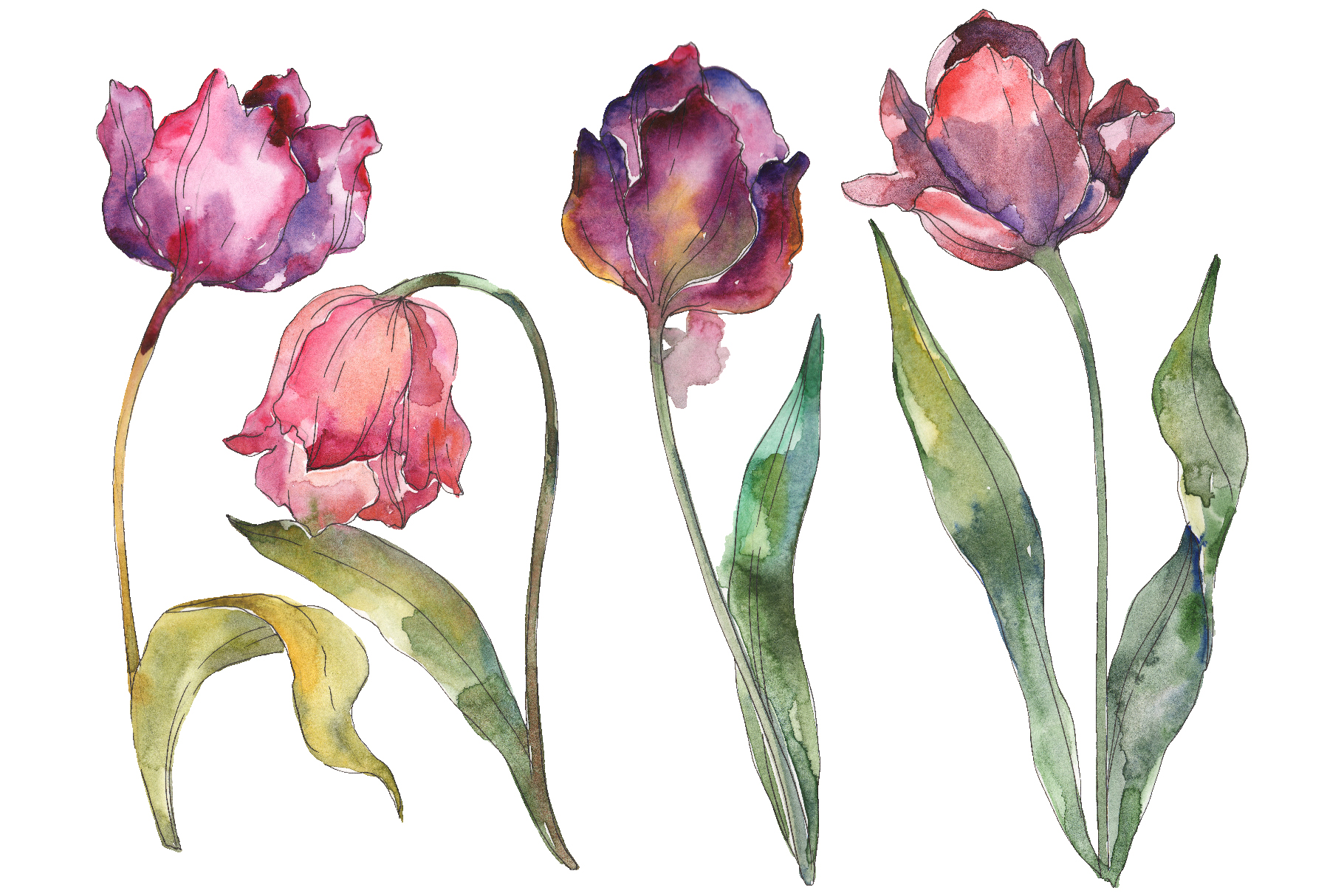 Tulips Watercolor png example image 1