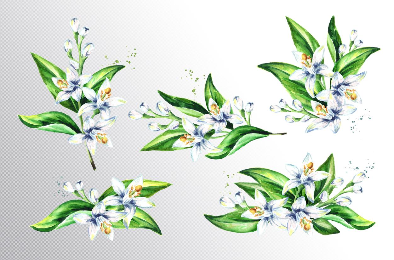 Neroli. Watercolor collection example image 2