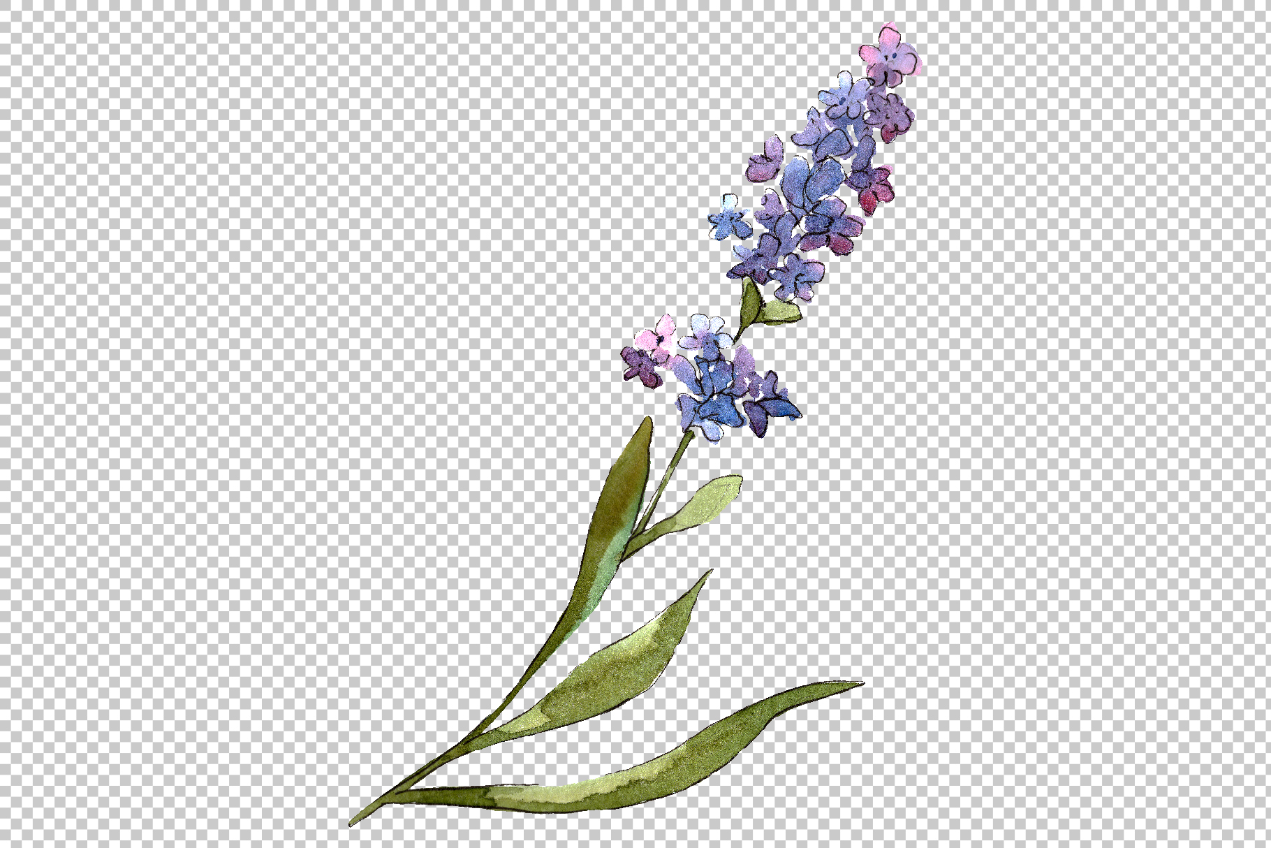 Bouquet of idyll lavender Watercolor png example image 7
