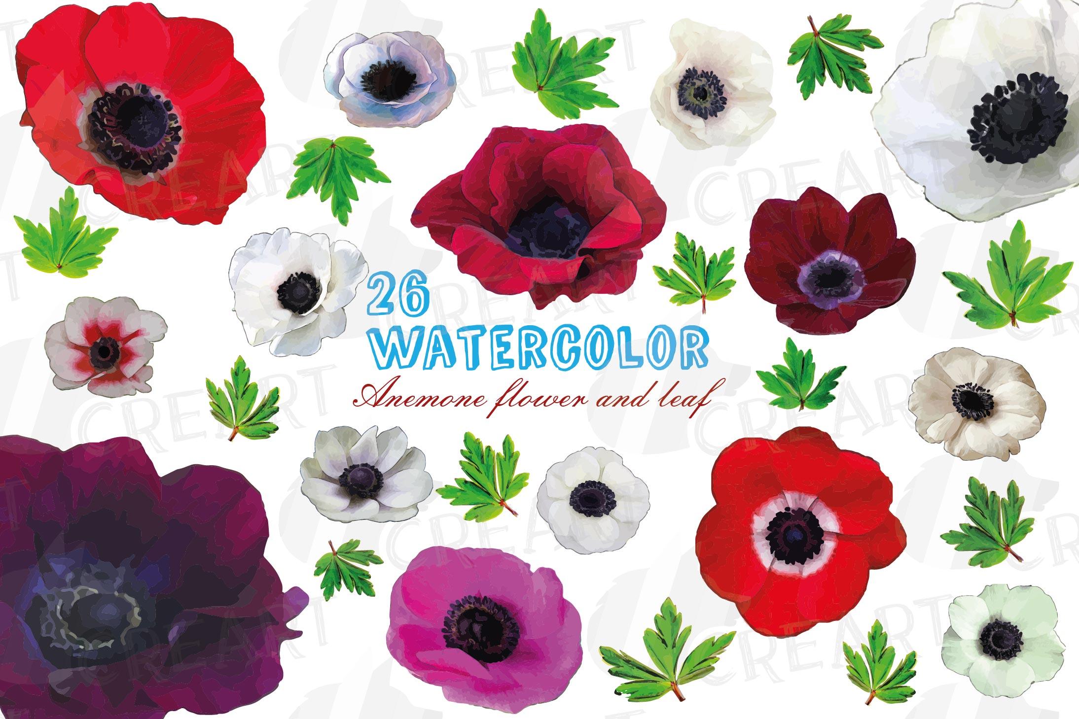 Anemone watercolor clip art pack, watercolor anemone design example image 1