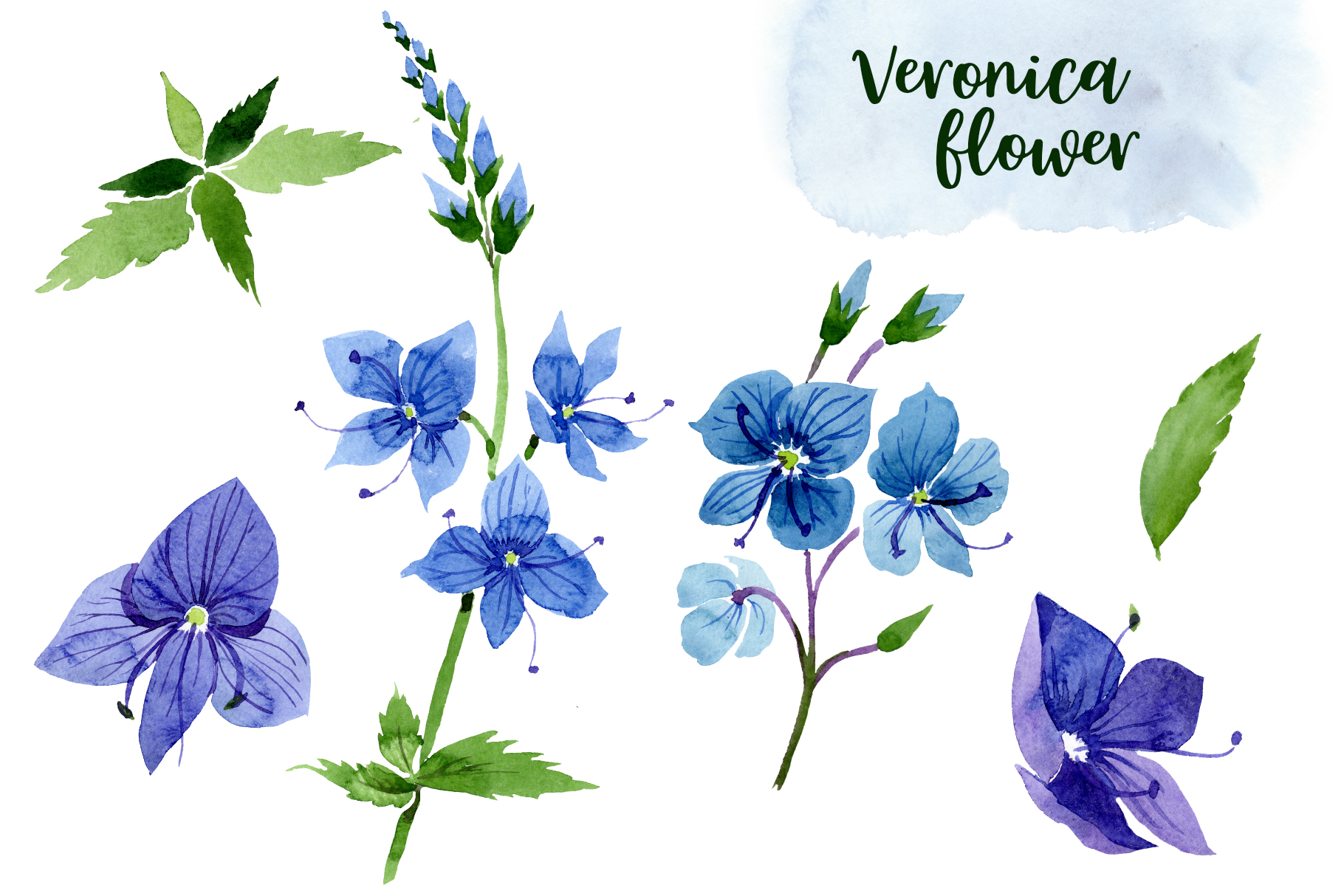 Veronica flower blue watercolor png example image 2