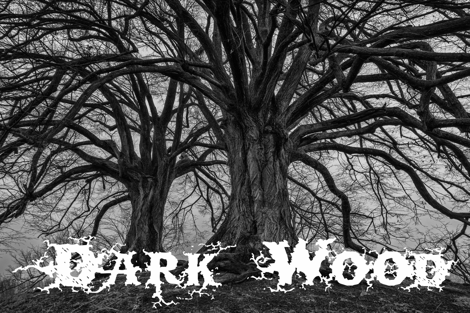 Dark Wood (family pack) example image 1