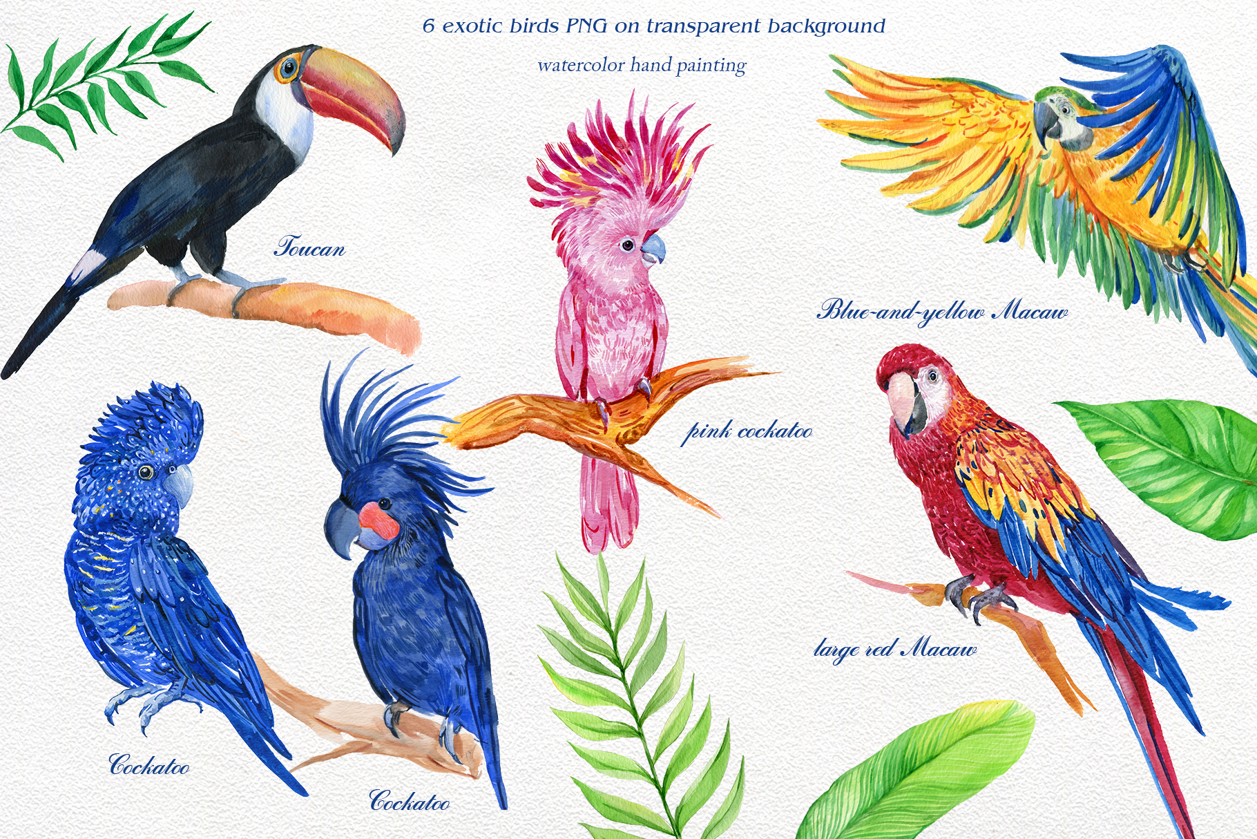Image result for parrots clipart