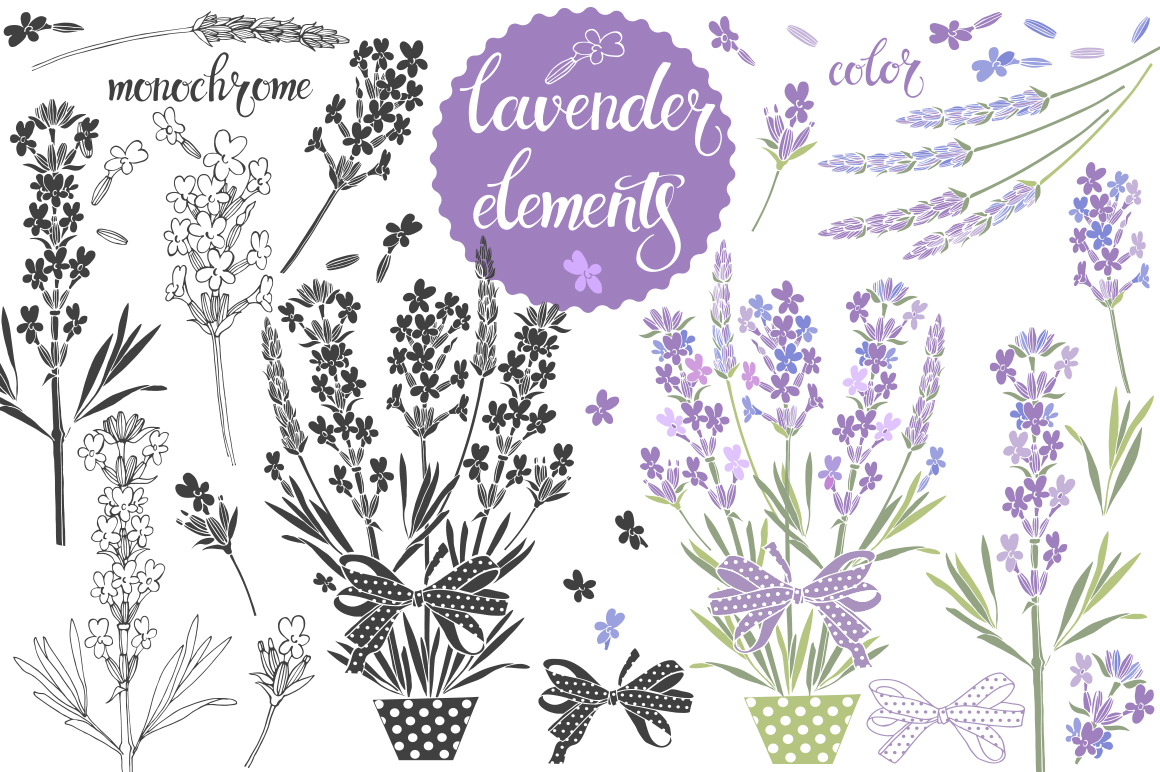 Lavender. example image 2
