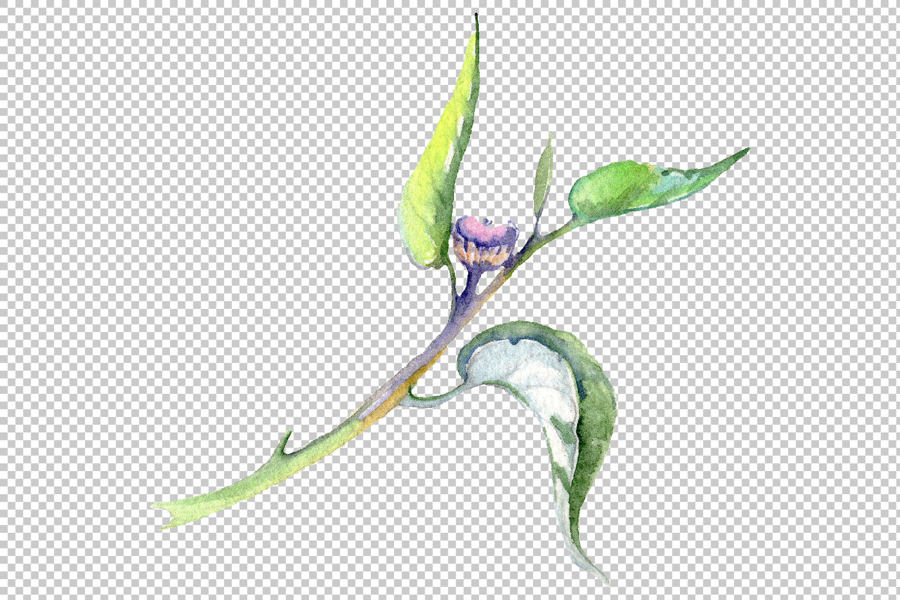 Eucalyptus Watercolor png example image 7