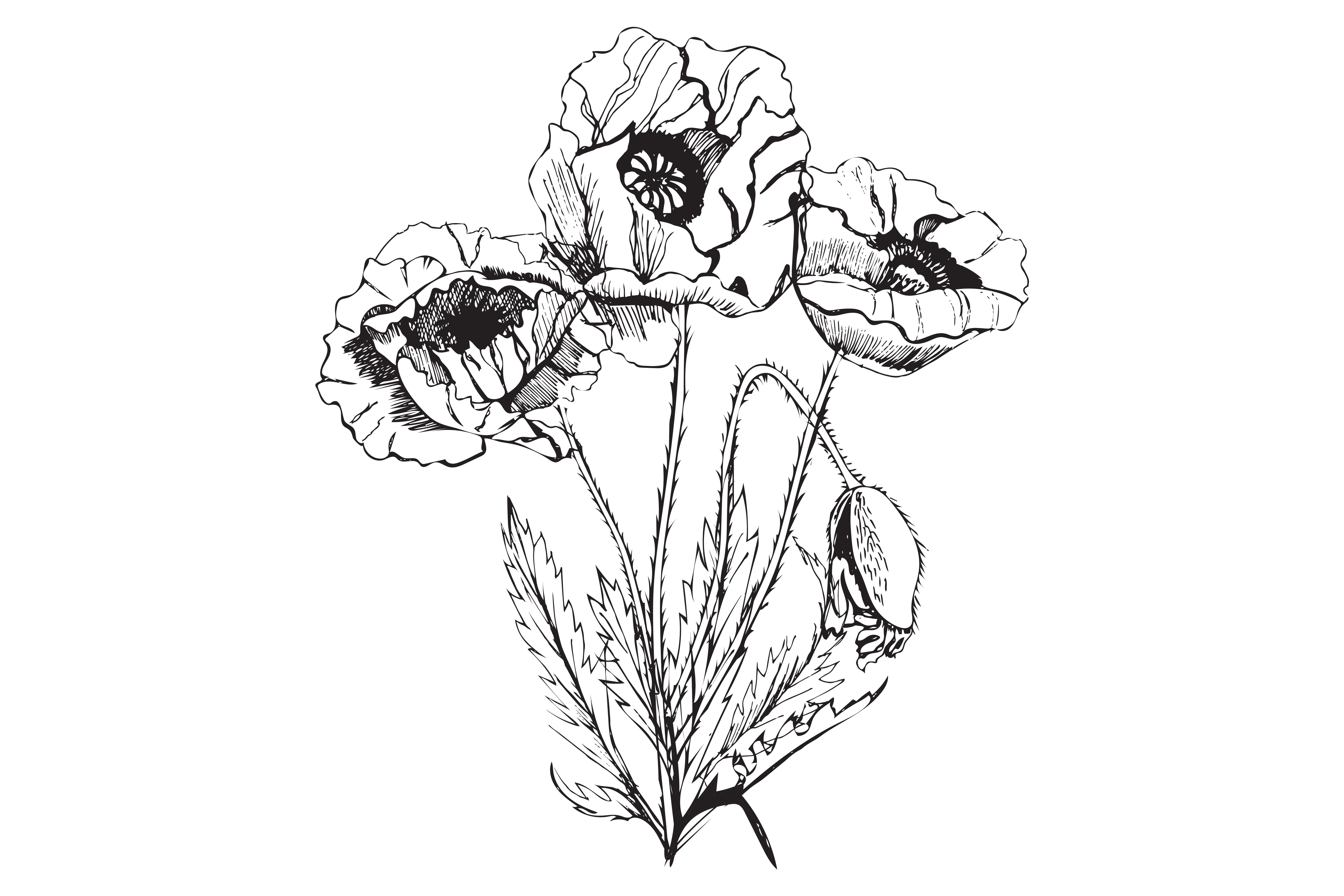 Bundle with sketches of poppy flowers. Modern and retro style.  example image 3