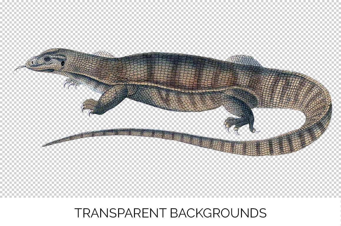 Reptile - Vintage Yellow Monitor example image 3