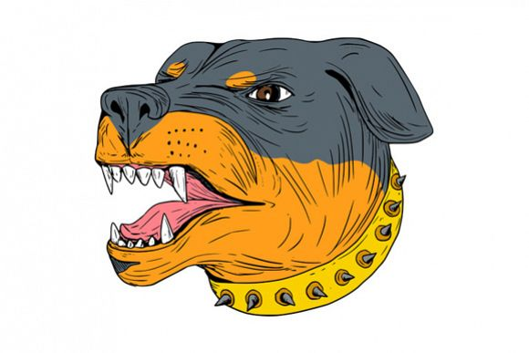 Rottweiler Guard Dog Head Aggressive Drawing example image 1
