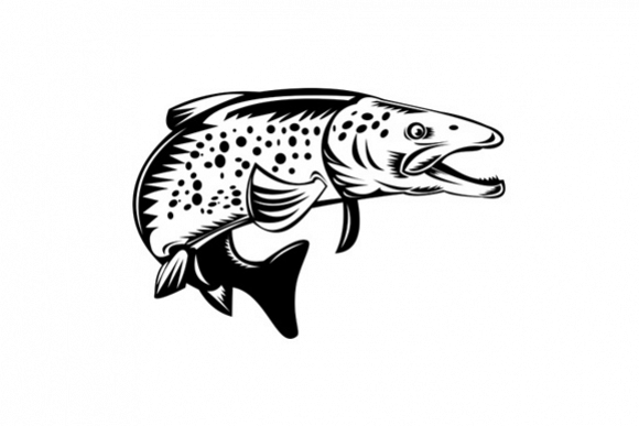 Spotted Speckled Trout Fish Jumping example image 1